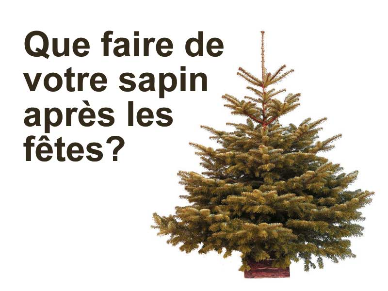 sapin_usage