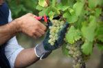 Jobdating pour les emplois dans la viticulture le 15 octobre 2019 à Aigues-Mortes